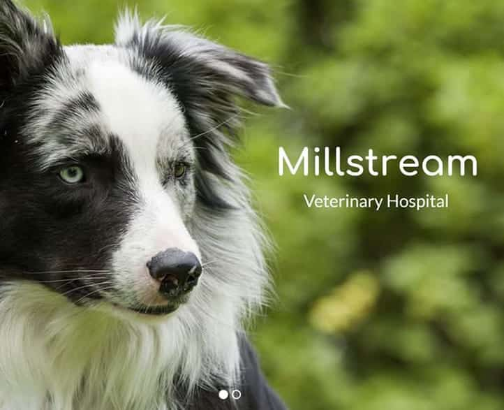Millstream Veterinary Hospital,<br>Langford